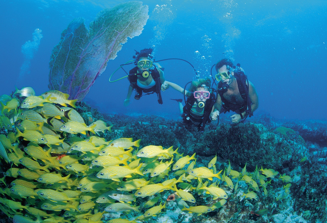 Things to do taino beach resort clubs - Dive in scuba ...